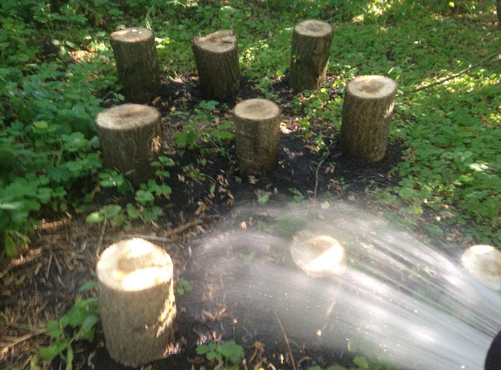 Выращивание грибов из пеньков